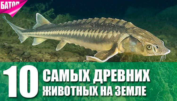 10 древнейших животных на земле