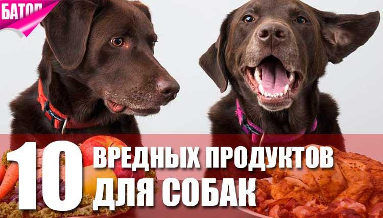 10 продуктов, которые НЕ полезны для собак
