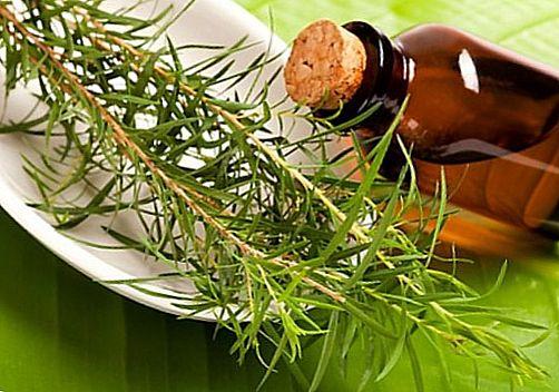 масло чайного дерева от акне