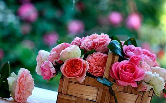 Цветы с открыткой