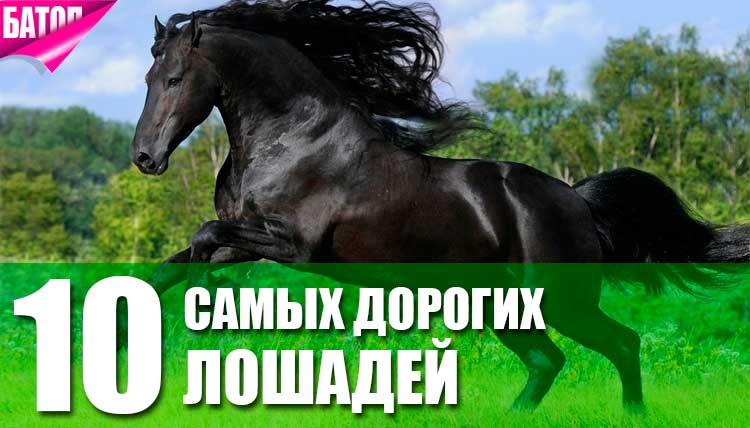 самые дорогие лошади