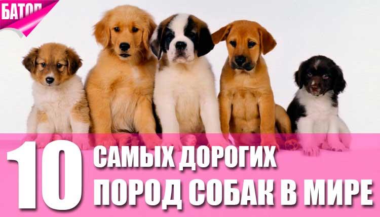 породы фото и цены собак
