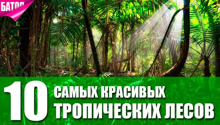 Самые красивые тропические леса