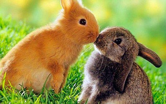 Кролики картинки смешные