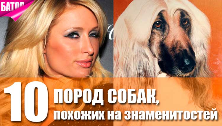 собаки, похожие на знаменитостей