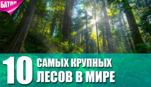 Самые крупные леса в мире