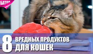 8 продуктов, которые не полезны для кошек