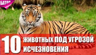 10 животных, которых используют в нетрадиционной медицине