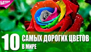 дорогие цветы