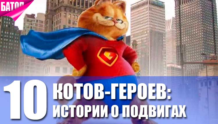 Удивительные поступки котов