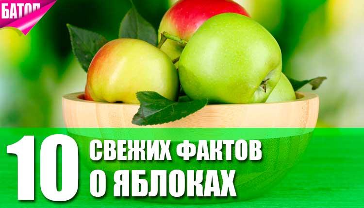 факты о яблоках