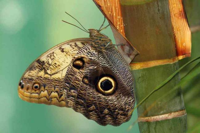 Секс зрелых красивых бабочек