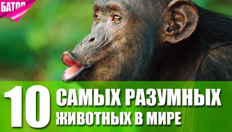 Самые разумные животные в мире