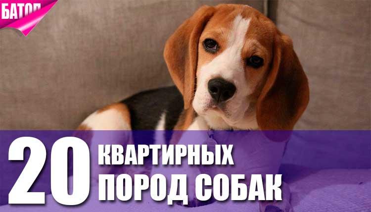 ТОП-20 квартирных пород собак