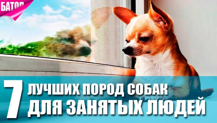 Лучшие породы собак для занятых людей