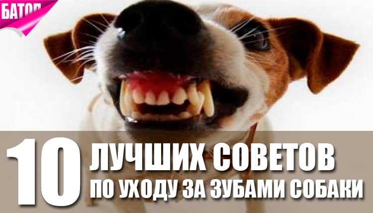 лучшие советы по уходу за зубами собаки