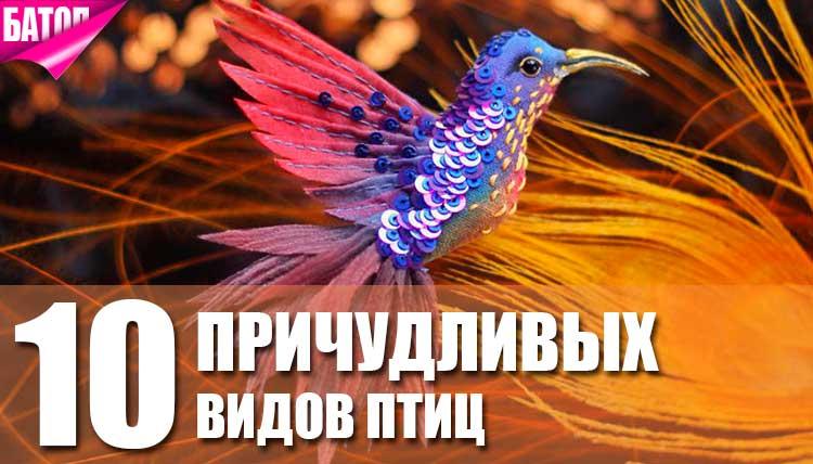 Самые удивительные виды птиц