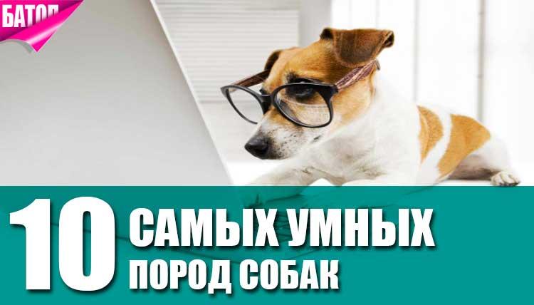 Самые интеллектуальные породы собак