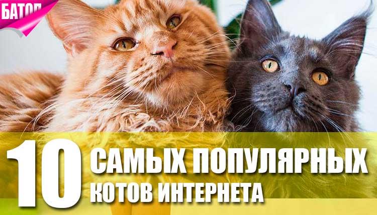 самые популярные коты в мире