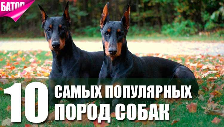 популярные породы собак и зачем они были выведены