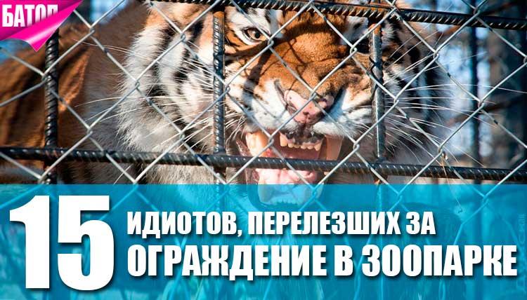 идиоты, перелезшие за ограждение в зоопарке