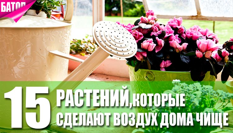 очищающие цветы