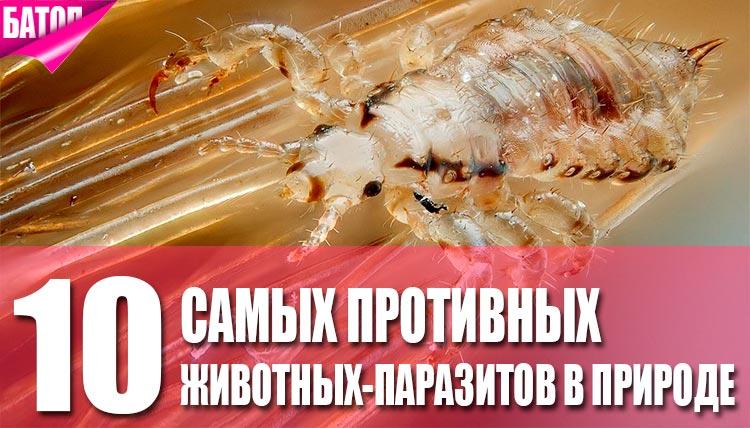 противные паразиты