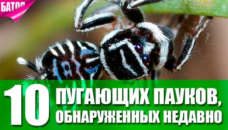 пауки обнаруженные недавно