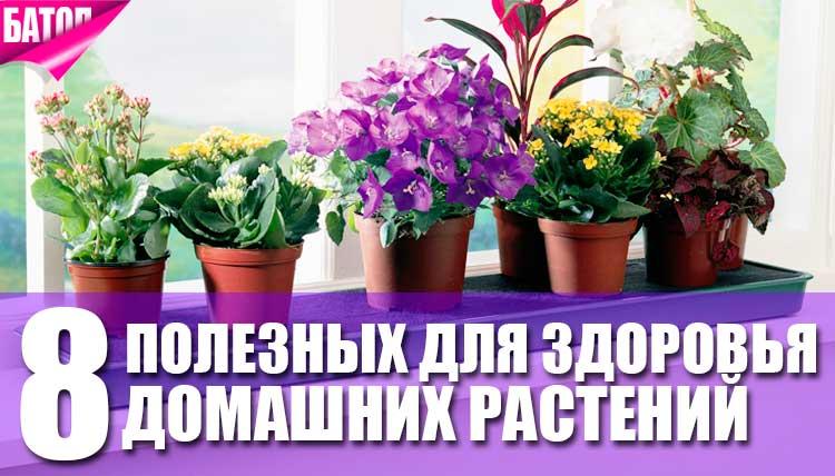 Полезны для здоровья домашние растения