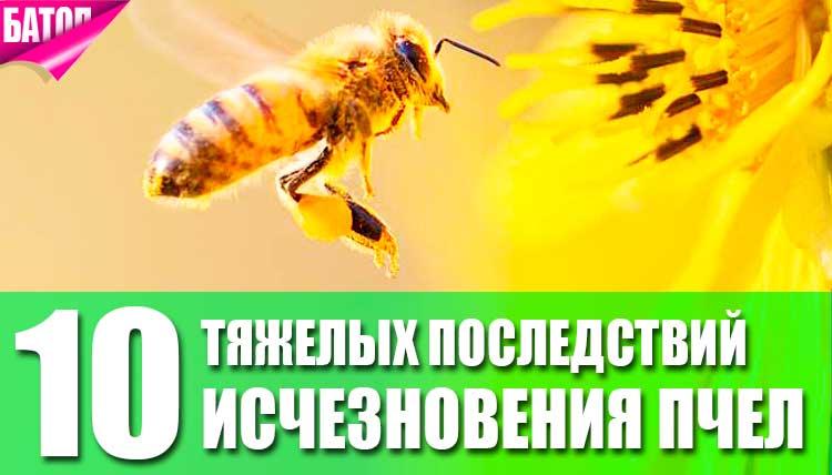 возможные тяжелые последствия исчезновения пчел на Земле