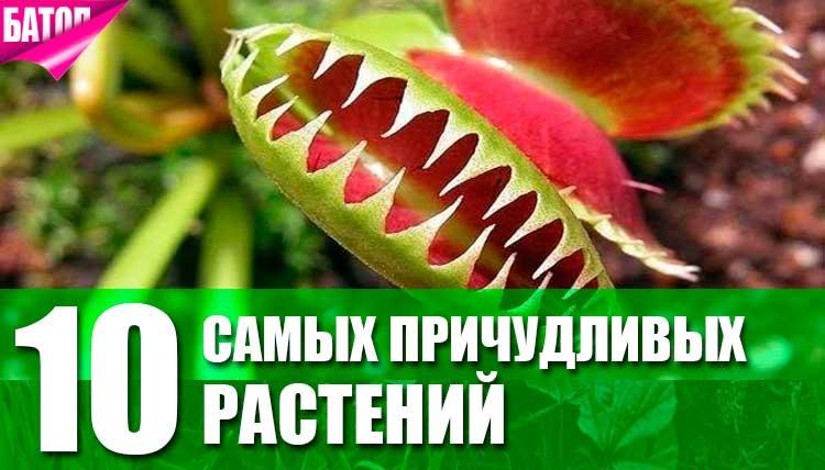 самые необычные растения