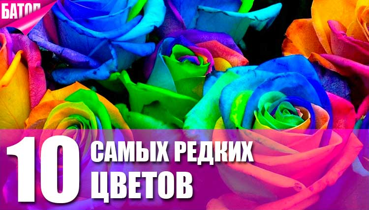 самые редкие цветы