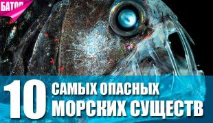 Самые опасные морские существа
