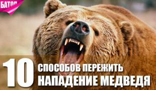 10 советов, как пережить нападение медведя