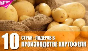 Страны-лидеры в производстве картофеля