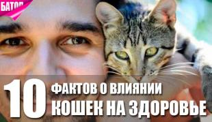 о влиянии кошек на ваше здоровье: 10 фактов, после которых вам точно захочется завести кота