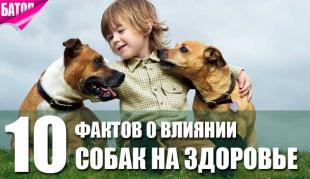факты о влиянии собак на здоровье