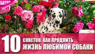 как продлить жизнь своей собаки