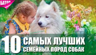 лучшие семейные породы собак