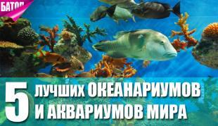 лучшие океанариумы и аквариумы мира