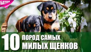 Самые милые щенки