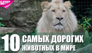 самые дорогие животные в мире