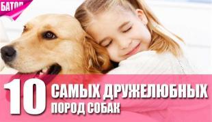 Самые дружелюбные собаки