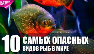 самые опасные виды рыб в мире
