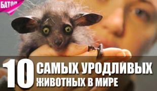 самые уродливые животные в мире