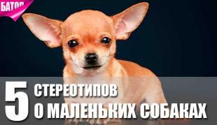 стереотипы о маленьких собаках