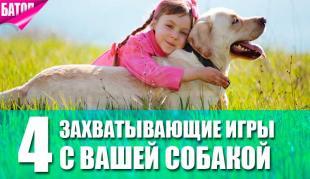 захватывающие игры с вашей собакой