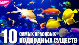 самые красивые подводные существа