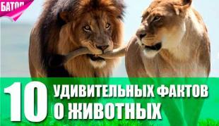 удивительные факты о животных