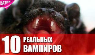 животные-вампиры